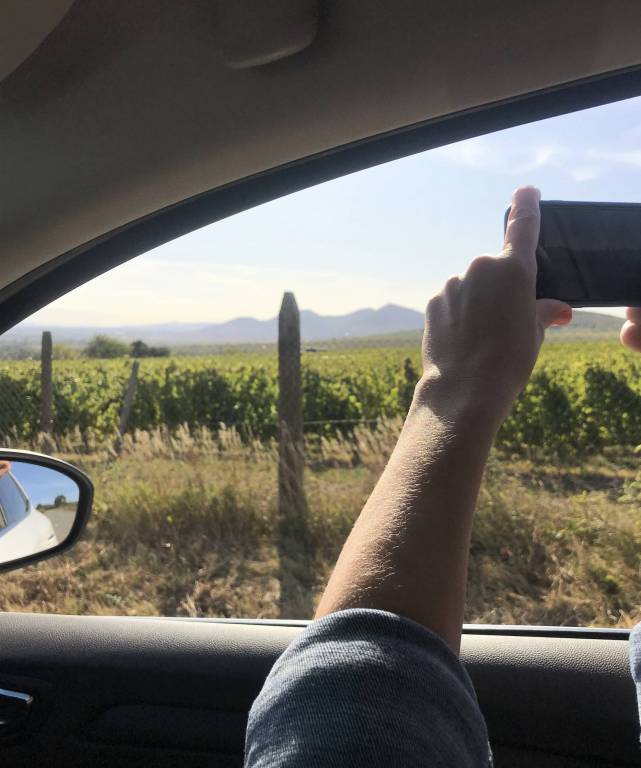 Виноградники Угорщини