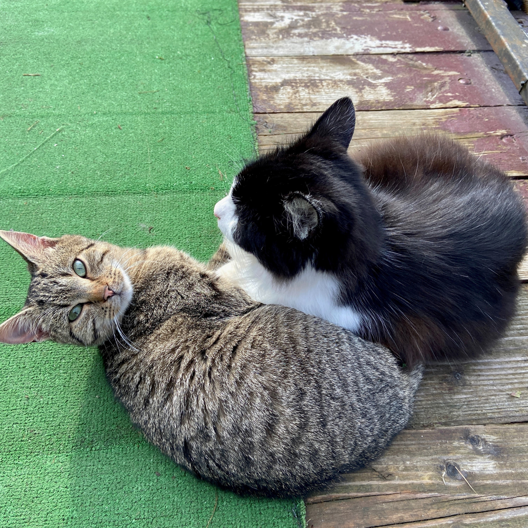 Приязні котики заохочують до спілкування з ними