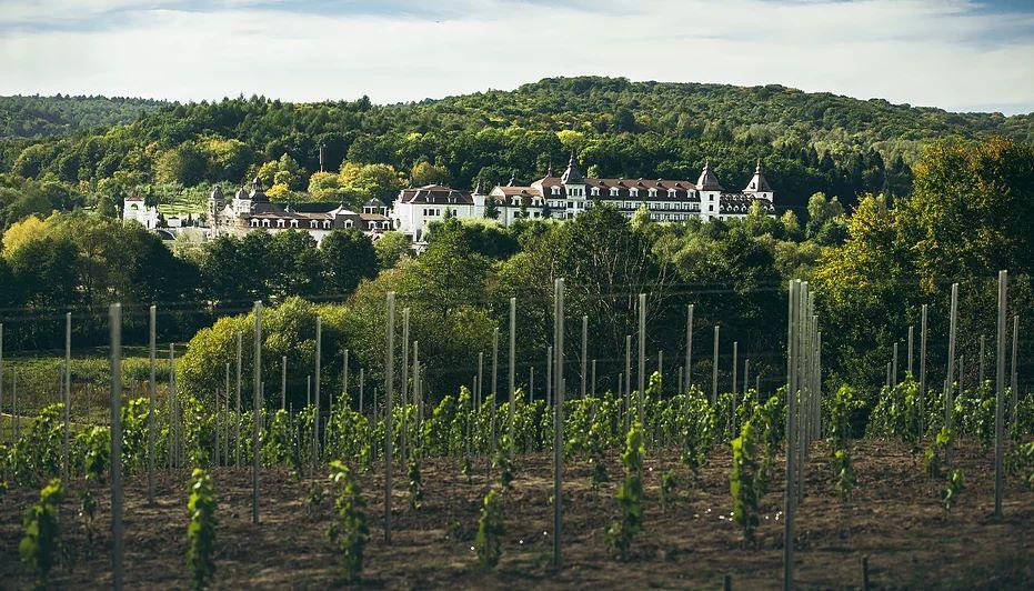 Виноробня Château Edem